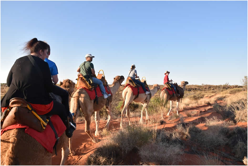 Camels at Sounds of Silence, Uluru
