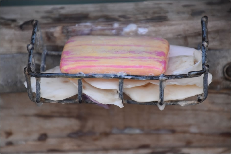 Soap dish at  Leichhardt Lagoon